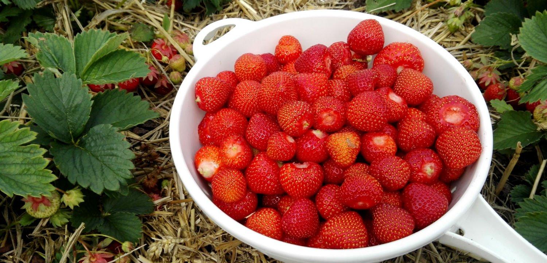 Berries from the garden