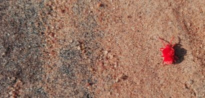 Bug on sand
