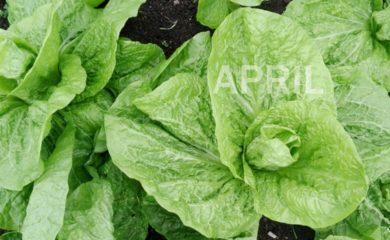 Seasonal in April