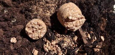 Corks on soil
