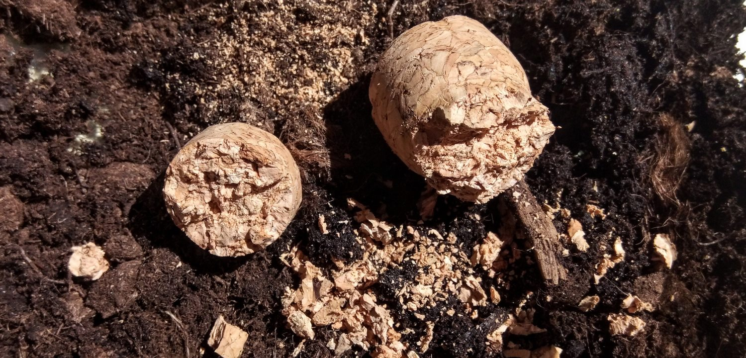 Broken corks on soil