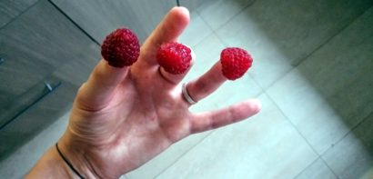 Raspberries on fingers